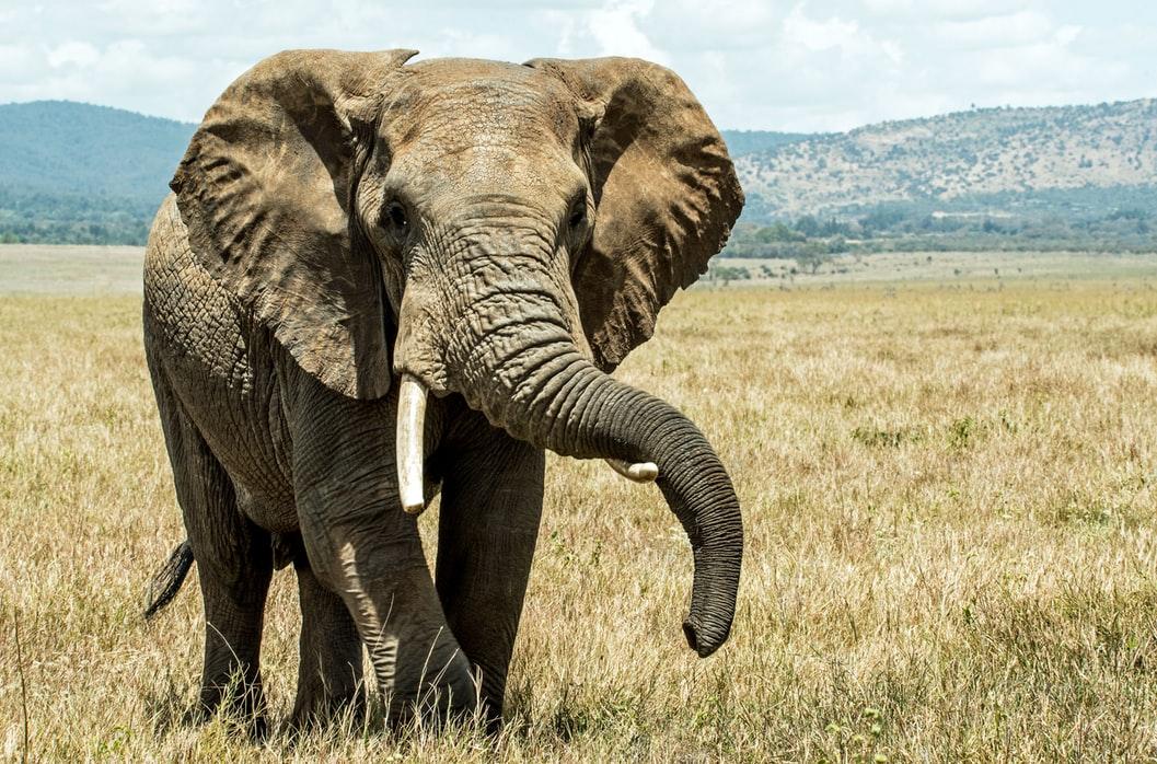 Elephant-on-chest-asthma